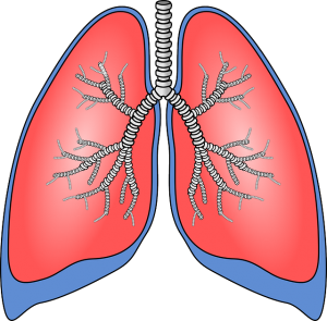 lungs-154282_640